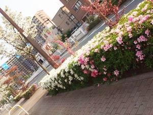 小松川三丁目のバス停前
